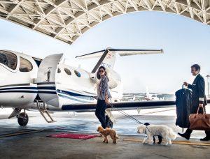 chien et jet privé location au décollage, sur la piste