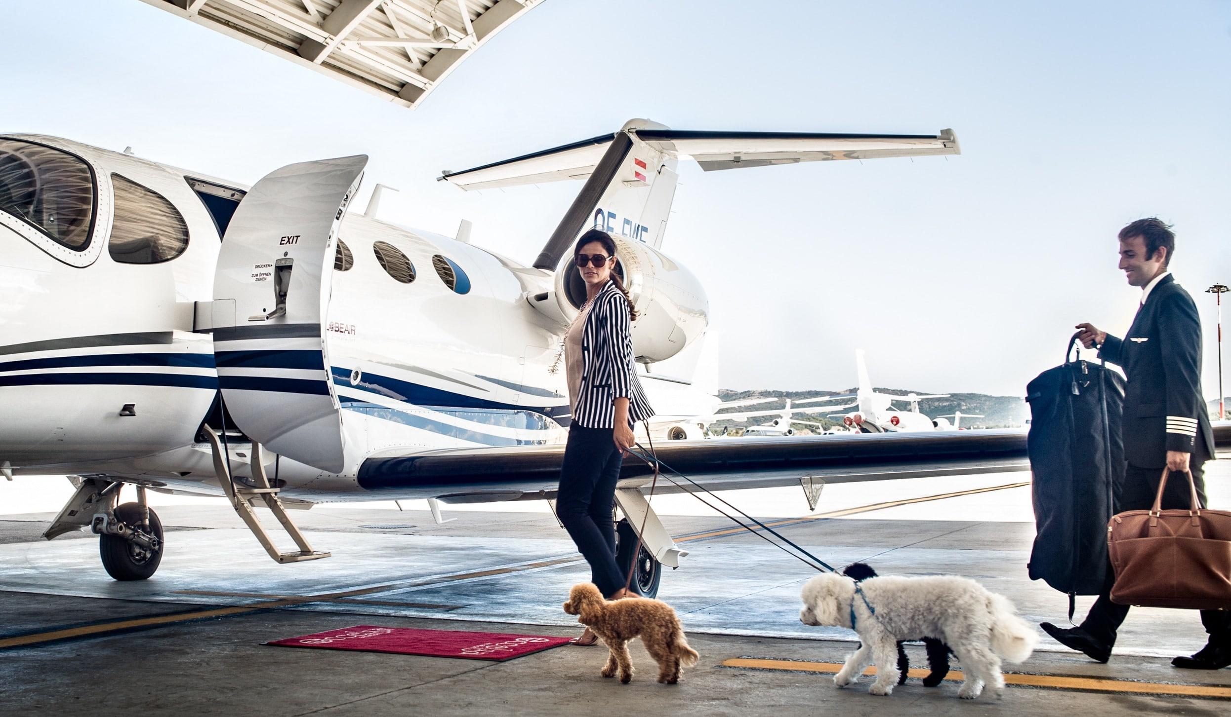 chien et jet privé mustang dans le hangar